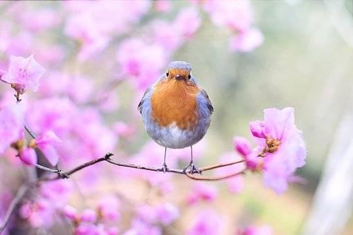 spring-bird-2295436__340