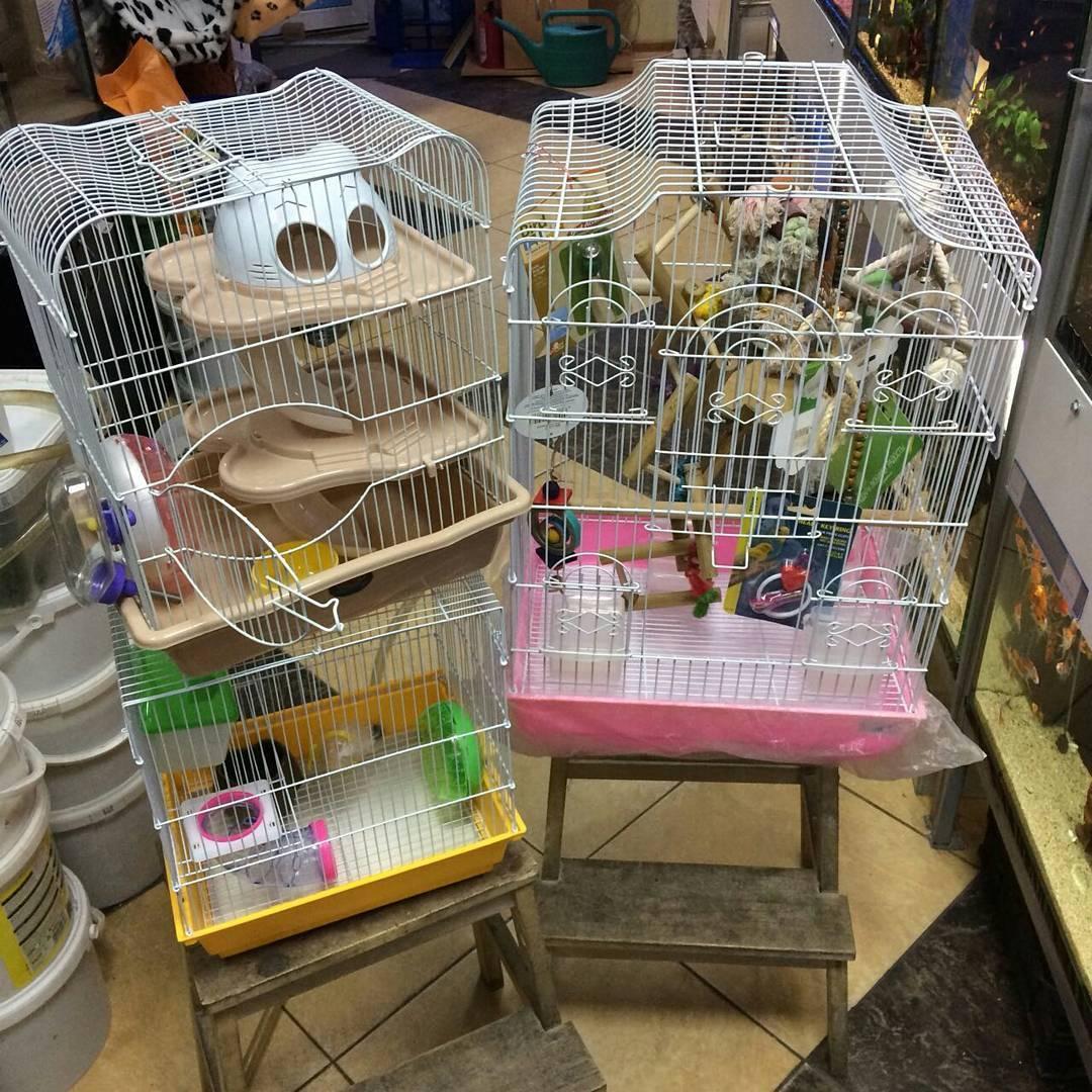 идея для магазина животных